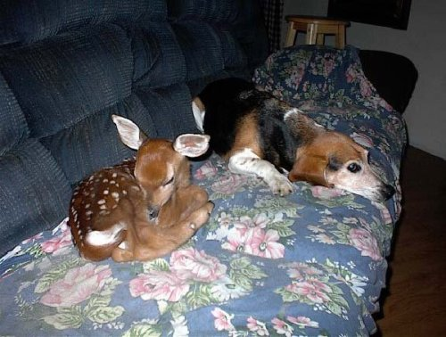 Deer and Dog 1