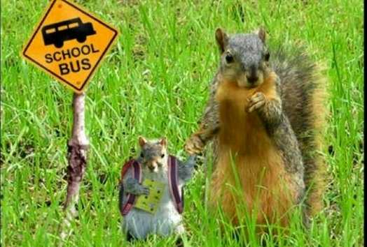https://iwanticewater.files.wordpress.com/2009/08/squirrels-at-bus-stop.jpg
