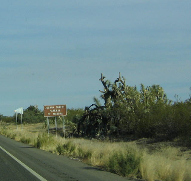 The Joshua Forest Parkway