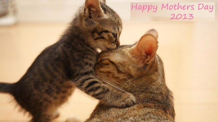 Cute-Cat-Celebrates-Mothers-Day-2013