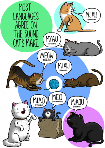 2-Most-languages-agree-on-the-sound-cats-make-by-James-Chapman-600x848