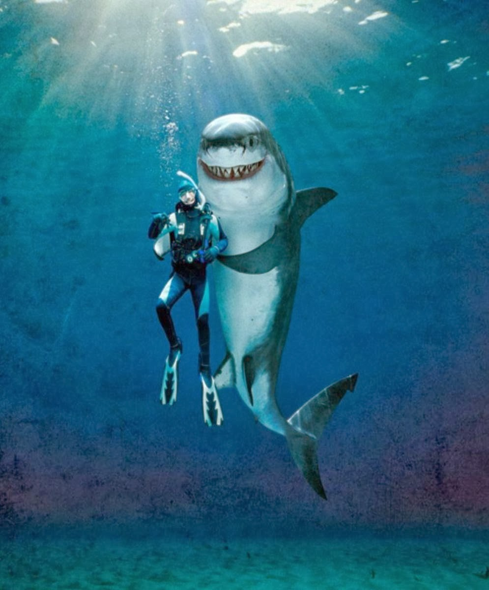funny sharks_00366648 - Phobia Halloween