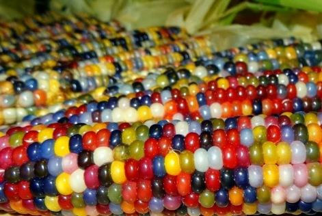 glass-gem-corn-0[9]