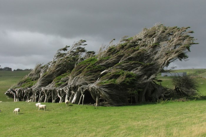 windswept-trees-slope-point-south-island-new-zealand1