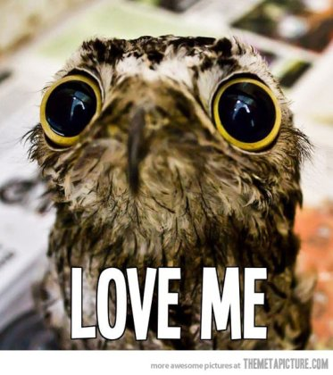Reasons Why I Love Owls 01