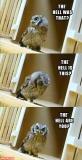 Reasons Why I Love Owls 02