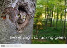 Reasons Why I Love Owls 05