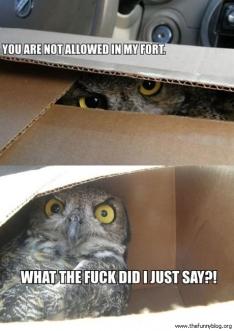Reasons Why I Love Owls 07