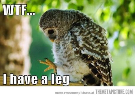 Reasons Why I Love Owls 08