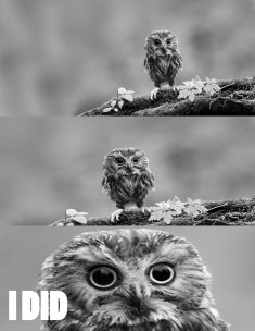 Reasons Why I Love Owls 10