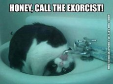 Cat Exorcist 02