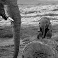Baby Elephants 03