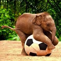 Baby Elephants 04