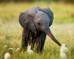 Baby Elephants 07