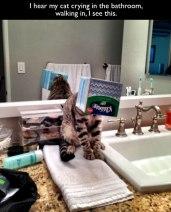Random Cat Craziness 06