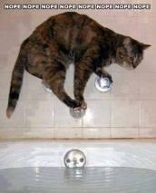 Random Cat Craziness 07