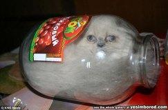 Cats-Are-Liquid-Kitten-In-Jars-If-It-Fits-I-Sits-01