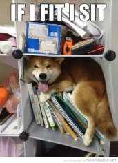 funny-pictures-dog-on-shelf-fit-i-sit