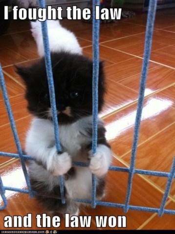 Jailed Kitty