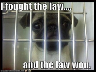 Jailed Pup