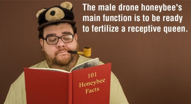 The Male Honeybee 01