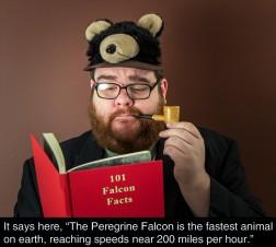 The Perigrine Falcon 01