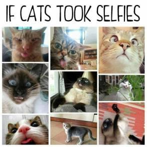 If Cats Took Selfies