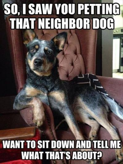 So, I Saw You Petting That Neighbor Dog