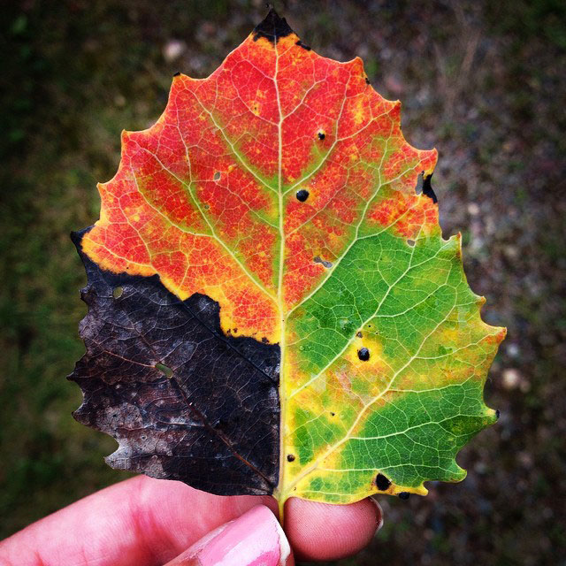 Picture Of The Day - A Leaf for All Seasons