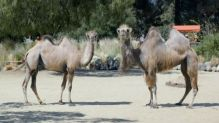 geico-hump-day-redux-hed-2014