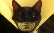 I'm Whatever Gotham Needs Me To Be