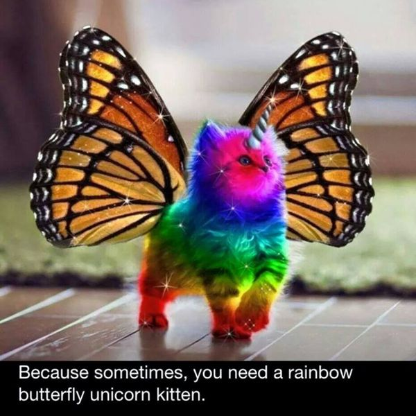 Rainbow Butterfly Unicorn Kitten